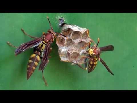 Bộ sưu tập côn trùng 2 - Page 13 Hqdefault