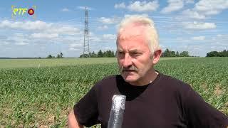 Kreisbauernverband zu verhagelter Ernte