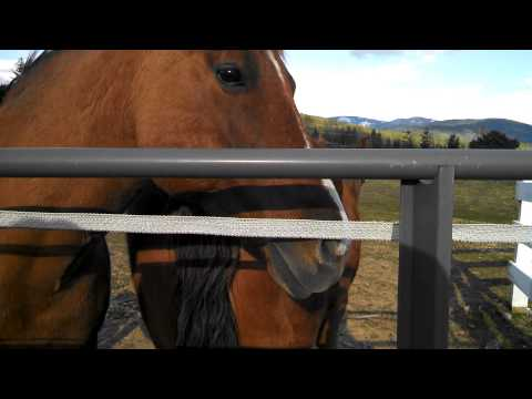 Penny the unbelievable talking horse