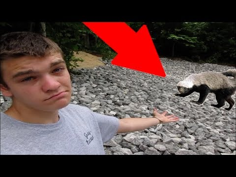 Eastern Rock Badger? - America's Best Kept Secret?!?!
