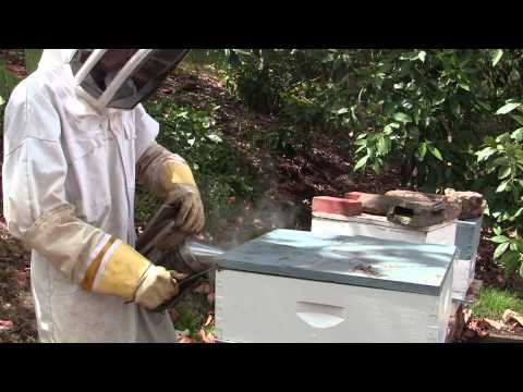 Hawaii's Youngest Beekeeper (Punavision - October 2012)