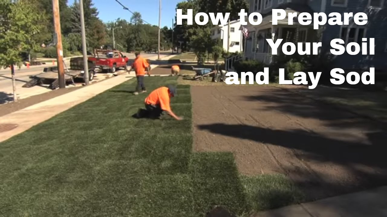 How To Prepare Your Soil And Lay Sod You