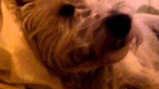 my dog leo xxx