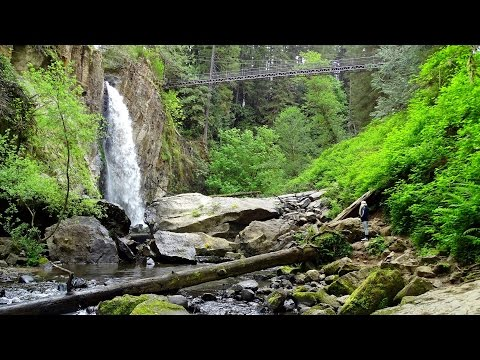 Drift Creek Falls Trail Waterfalls Amazing Waterfall and suspension bridge Hike Lincoln City Oregon