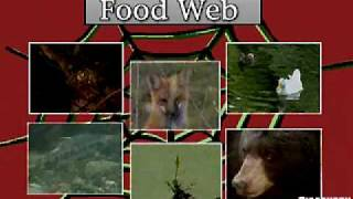 The_Food_Web.mov