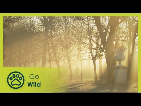 Schönbrunn - Well