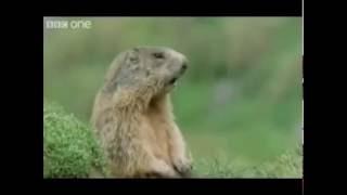 Śmieszne Zwierzęta Dubbing