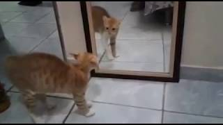 Gato se caga de medo em frente ao espelho