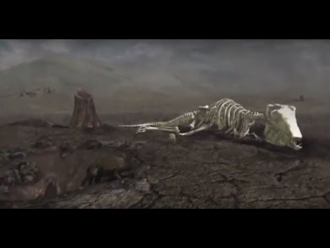 EVOLUTION - EXTINCTION - NOVA DOCUMENTARY - History Discover