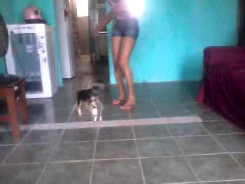 Marina e o cachorro brutos dançando muito legal