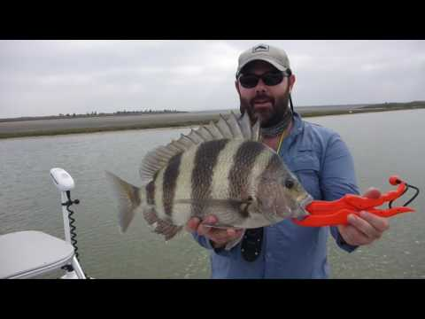 How to fish Live shrimp for redfish, trout, blackdrum, sheepshead