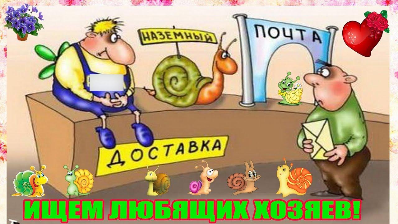 Отправляю яйца улиток ахатин - YouTube