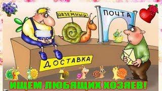 Улитки ахатины отправляются в дорогу. Каким образом? Спешите,пока нет морозов! Только по Украине!