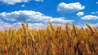 видео Украине грозит глобальное потепление