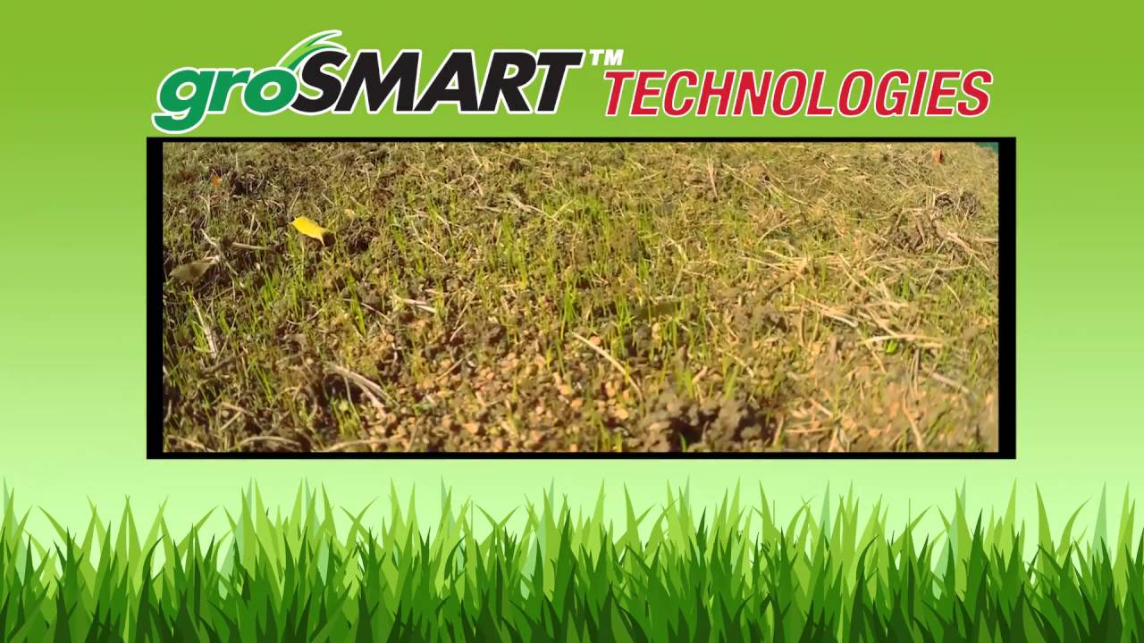Grosmart Revolutionary Turf Type Tall Fescue Grass Seed