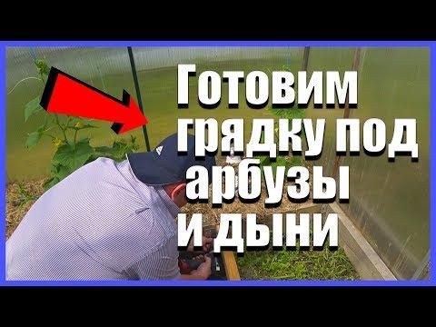 Выращивание арбузов и дынь в Московской области своими руками.