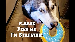 Breakfast With Funny Dogs | Tonka Brings A Toy Donut | Demanding His Food!