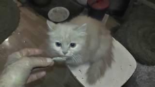 Уроки кошки-мамы-Пали для своего младенца-котика.  11. 11. 2018