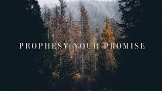 Prophesy Your Promise (Lyrics) ~ Bryan & Katie Torwalt