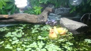 Террариум 400 л., черепаха с жадностью поедает мел