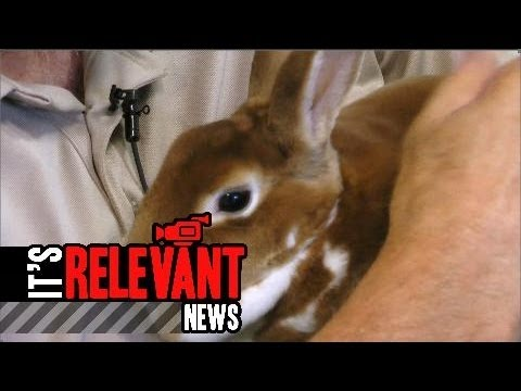Pet of the Week: Domesticated Rabbit