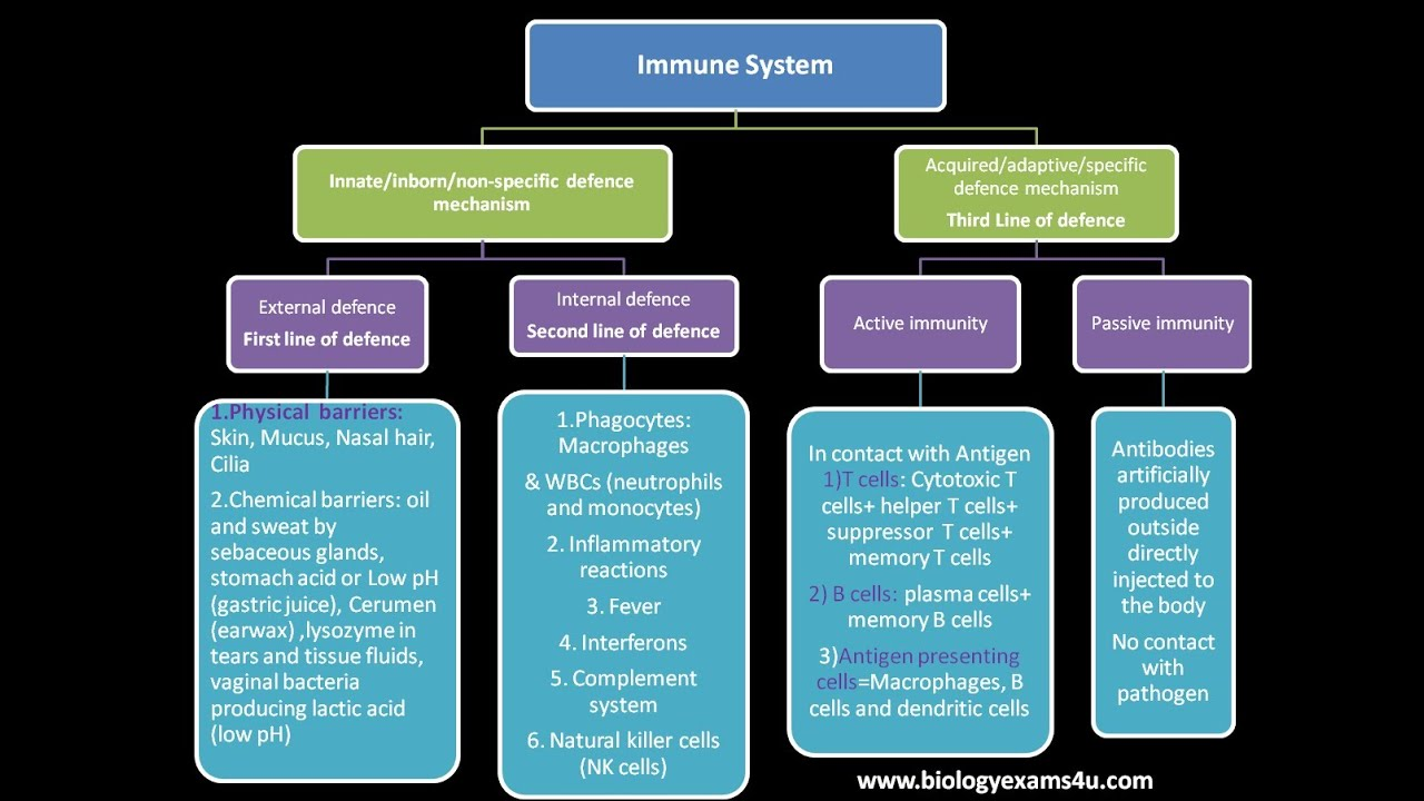 Immunology Tutorial Immune System An Introduction Youtube