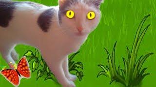 Защищаю рассаду от кошки!