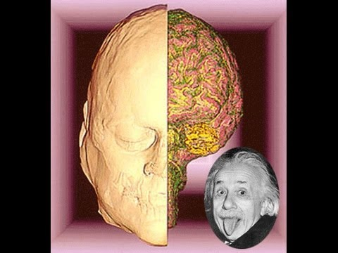 How Albert Einstein's Brain Worked  Video Will Blow Your Mind !
