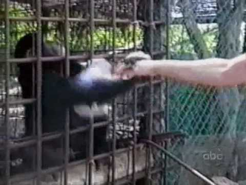 29 Monkeys In 38 Seconds - AFV | OrangeCabinet