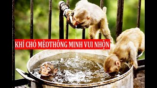 KHỈ - CHÓ - MÈO THÔNG MINH VUI NHỘN | Tú Nguyễn Channel