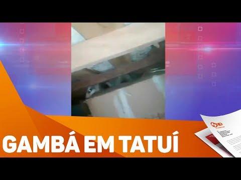 Gambá invade casa em Tatuí - TV SOROCABA/SBT