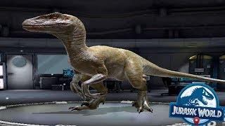 VELOCIRAPTOR Level 15 - Jurassic World Alive Android Gameplay