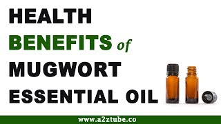 Health Benefits of Mugwort Essential Oil