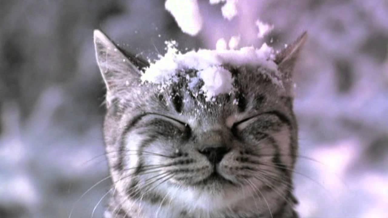 Wallpaper Falling Snow Whiskas Kočky By Kupovaly Whiskas Reklama Youtube