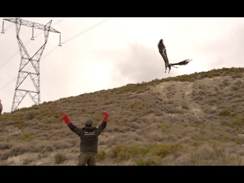 "Video ""Satellite radio-tracking of the golden eagle in Navarra"""