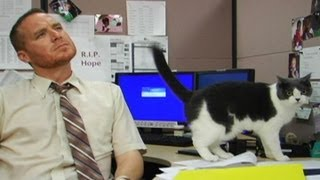Man In The Box: Office Cat