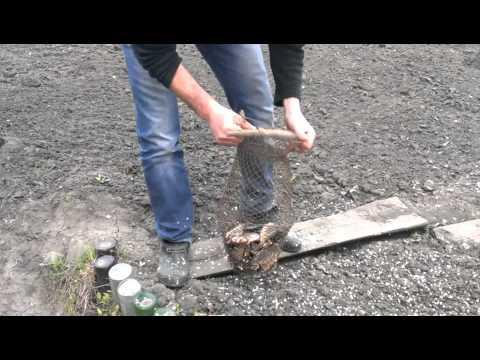 видео как правильно чистить карася