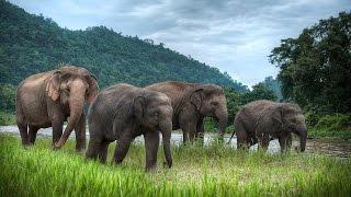 Дикая природа Тайланда Часть 1 Документальный фильм NationalnGeographic
