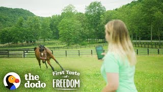 starving-horse-becomes-so-gorgeous-and-happy-the-dodo-first-taste-of-freedom