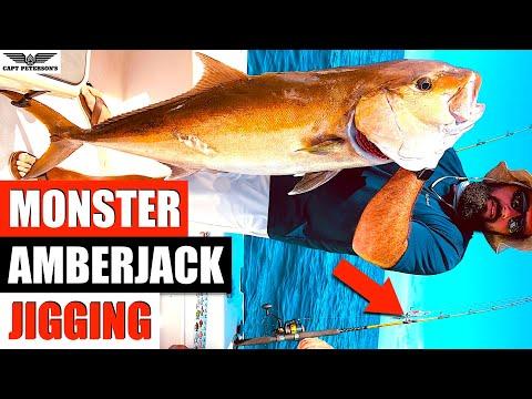 Monster Amberjacks
