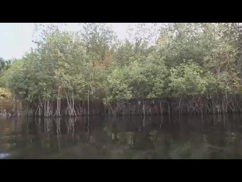 Benin launches Mangroves ecosystems restoration pilot