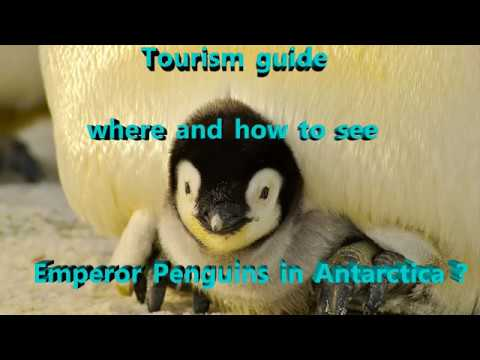 Travel guide - Where and how to see Emperor Penguins in Antarctica ? (2018)