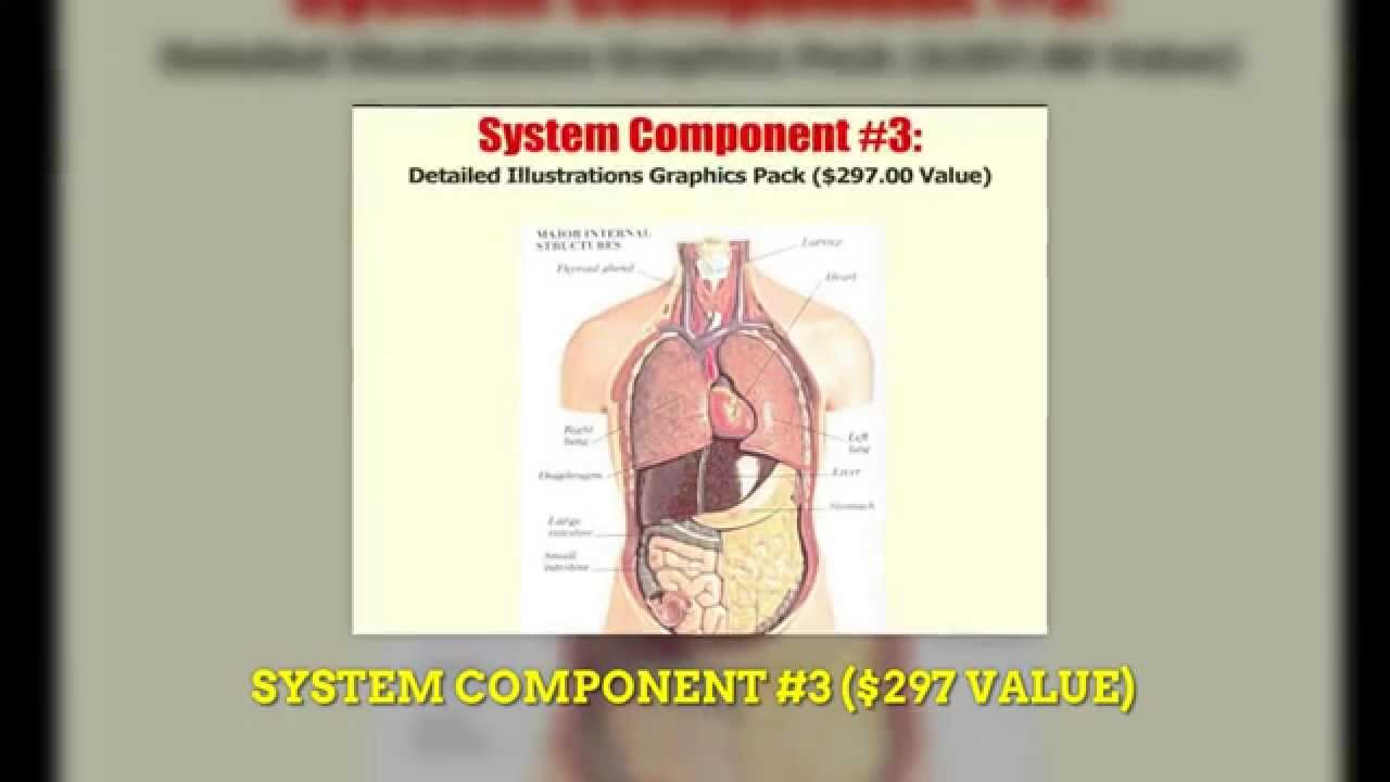 HUMAN ANATOMY PHYSIOLOGY REVIEW 2014 | human anatomy physiology ...