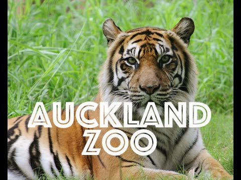 New Zealand Adventures: Auckland Zoo