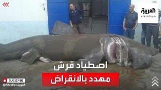 صيادون جزائريون يصطادون قرشا بلغ طوله 6 أمتار ووزنه 20 طناً