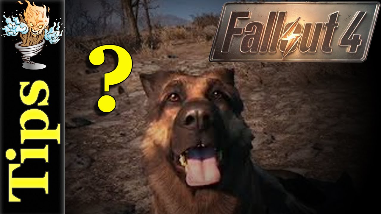 how to find dogmeat ps4
