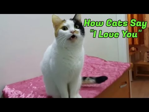 10 Signs Your Cat Loves You
