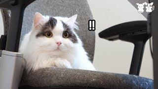 겁쟁이 고양이가 무서울 때 최대한 도망치는 법!