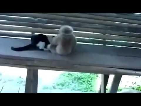 猫と猿の戦い