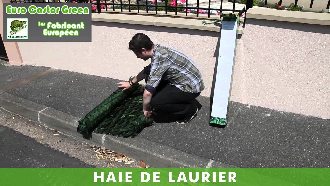 best haie de laurier haie brise vue occultant clture canisse haie synthtique youtube with brise